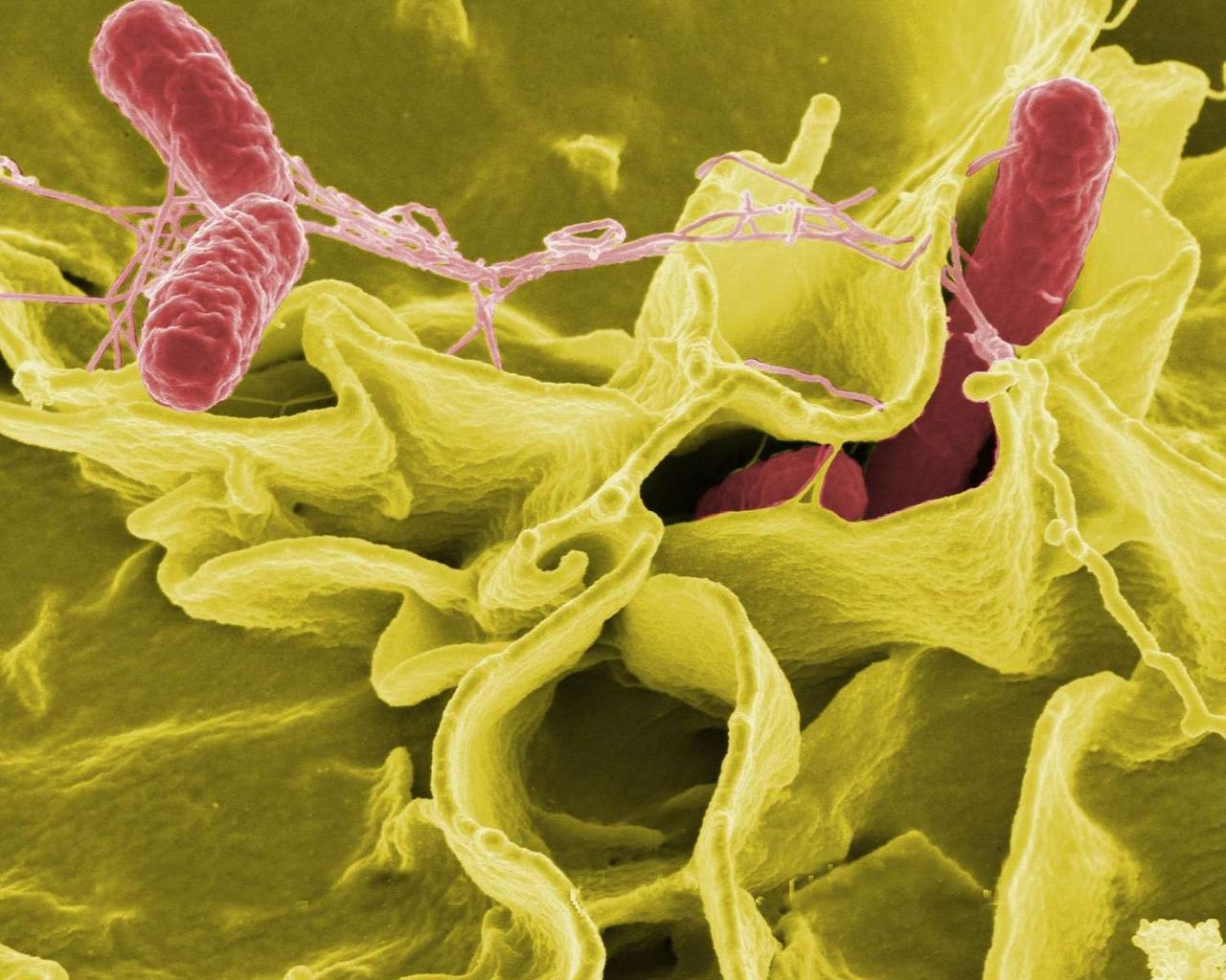 Rapidly Spreading Salmonella Outbreak Reported—Source Currently Unknown
