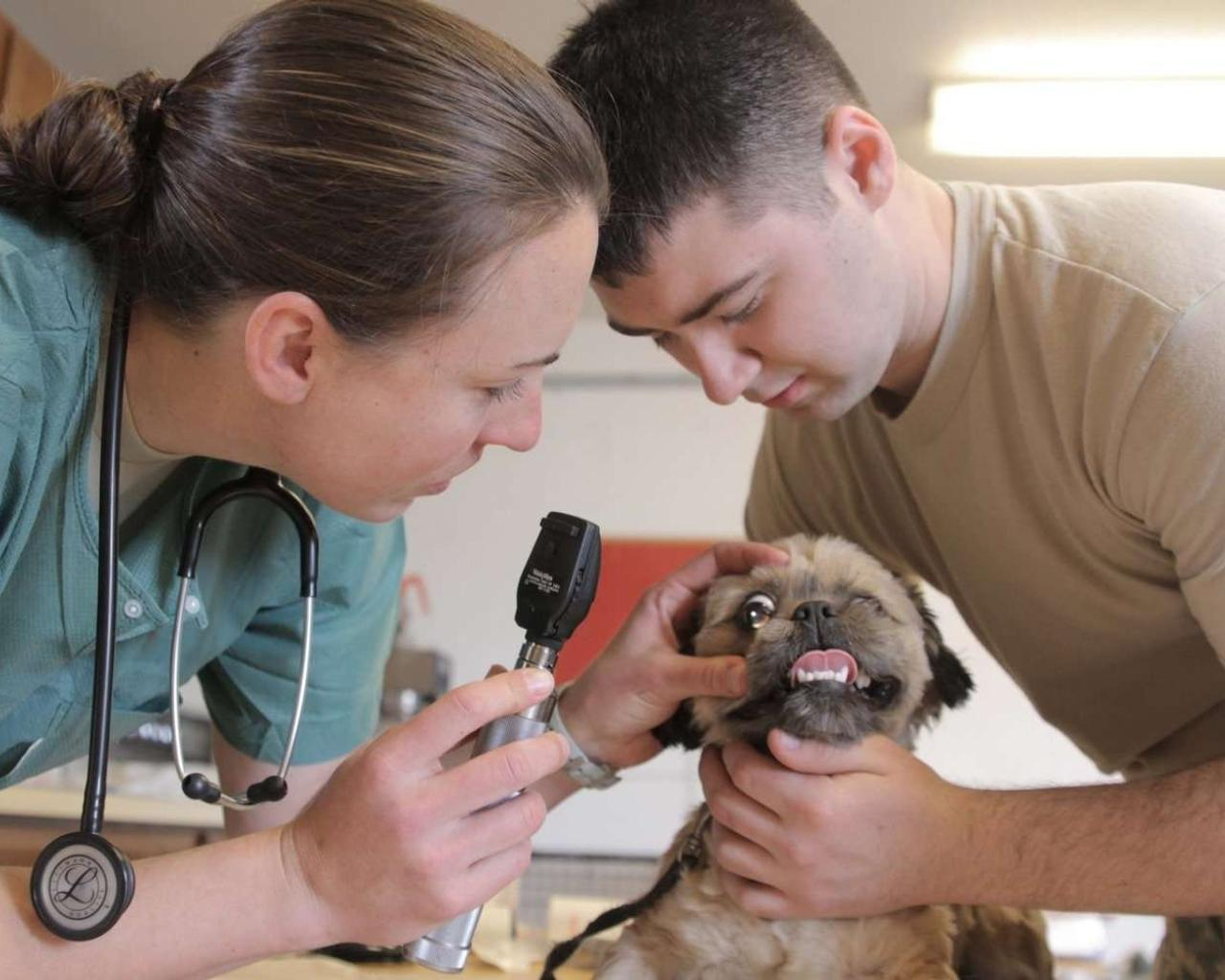 Veterinarians Becoming More Cautious In Face Of Growing Opioid Crisis—Is This What It Is Coming To?