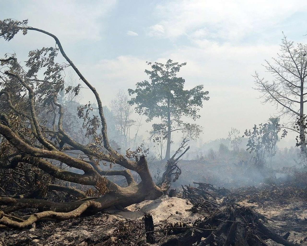 California Governor Asks Major Disaster Declaration Amid Wildfires — Could They Be Prevented?