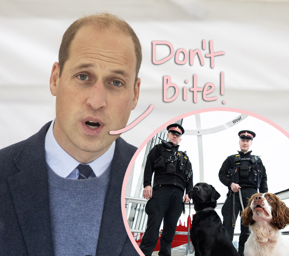 OMG! Prince William Was Once Attacked By A Police Dog At Queen Elizabeth's Country Estate!