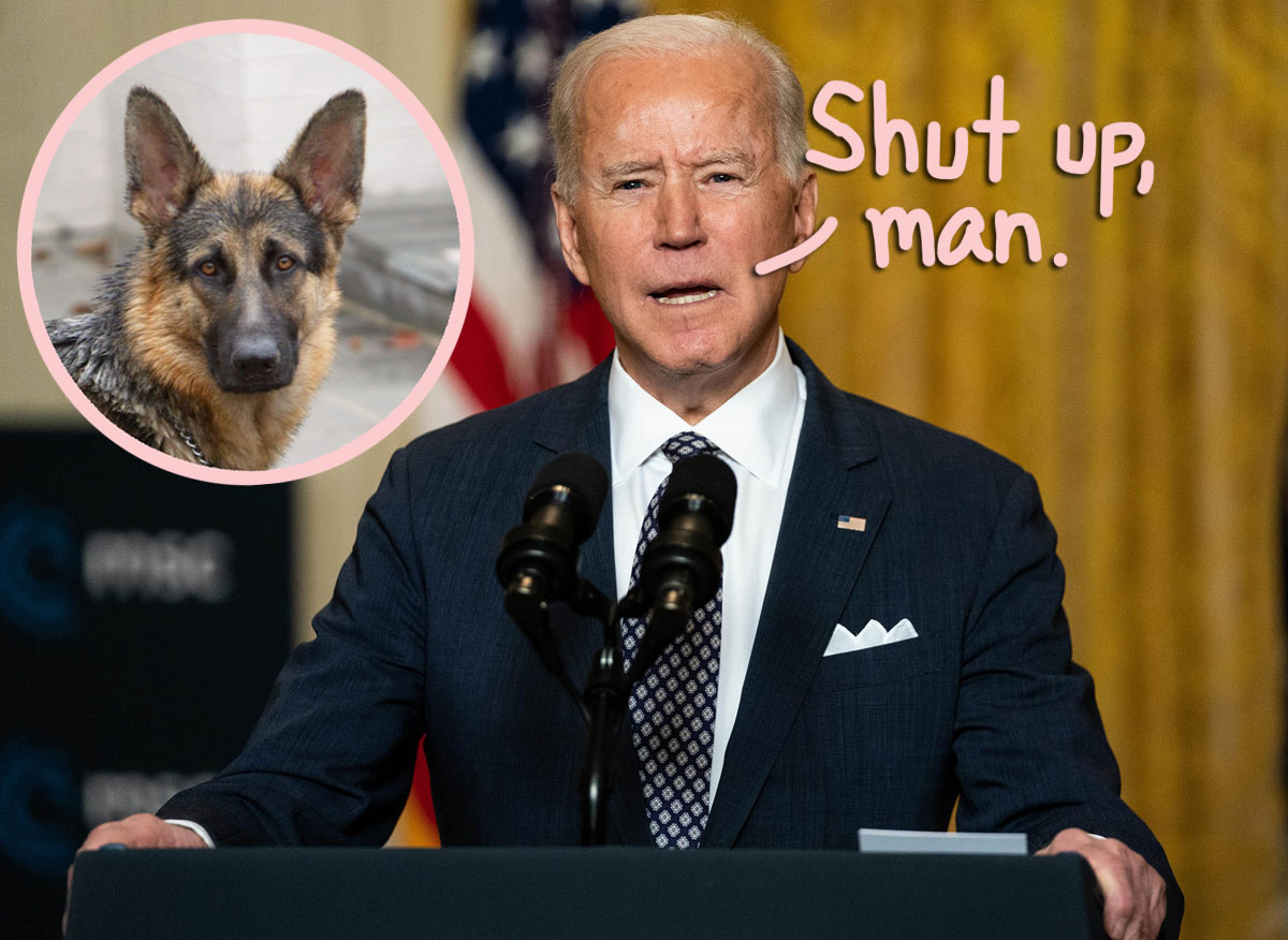 Right-Wing News Show Insults Joe Biden's Rescue Dog Champ In Bizarre Live TV Segment — WTF?!