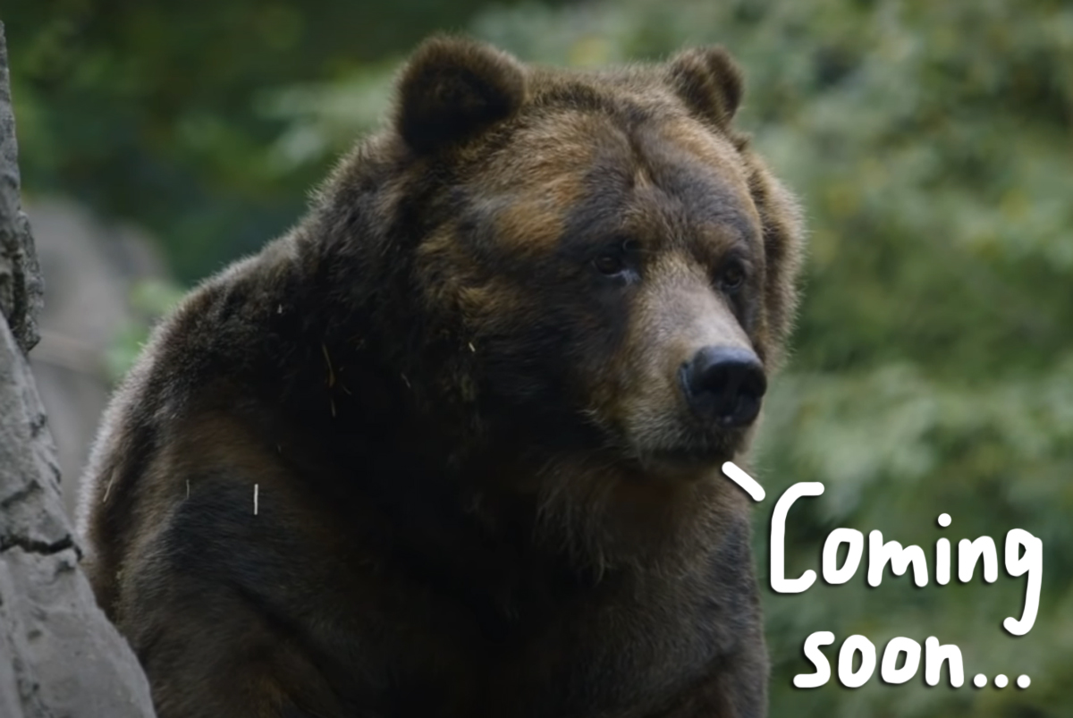 Twitter Goes WILD Over Cocaine Bear Movie — Based On TRUE Story Of A Bear Who Ate 70 Lbs Of Cocaine!