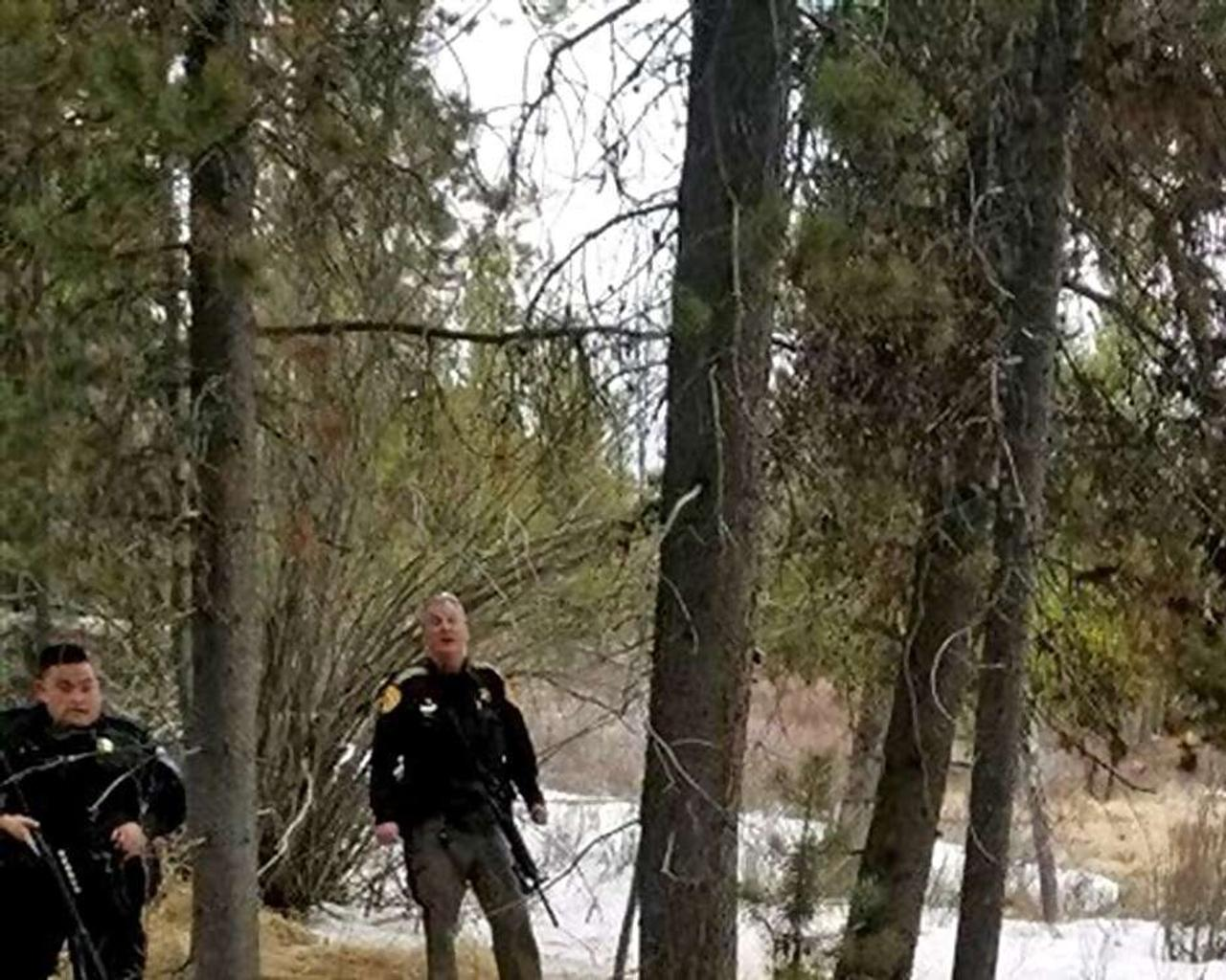 Arkansas man admits to cutting down trees in Mark Twain National Forest